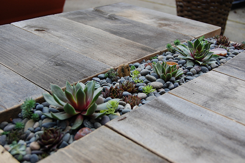 Summer DIY Roundup - Succulent Table