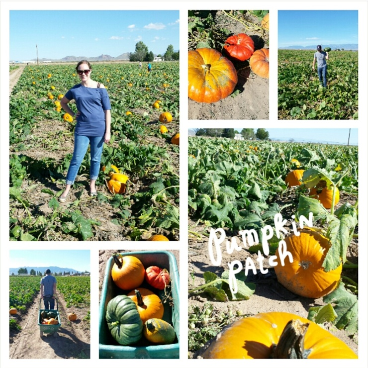 Time to Get Away - Wilcox AZ - Apple Annies Pumpkins and Produce