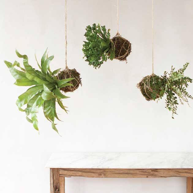 Hanging-Fern-String-Garden---Terrain.jpg